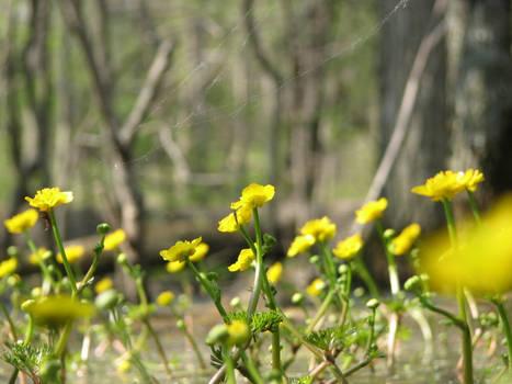 Swamp Flowers II