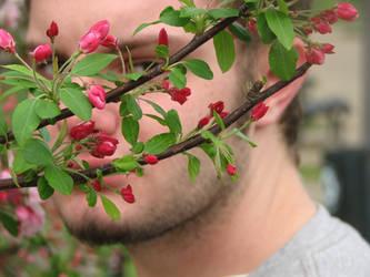 Cherry Blossoms by Wonderdyke-Stock