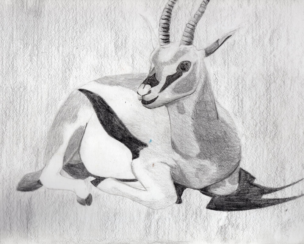 Viewing gallery for okapi pencil drawing
