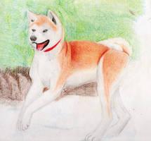 Akita inu by InuCloud96