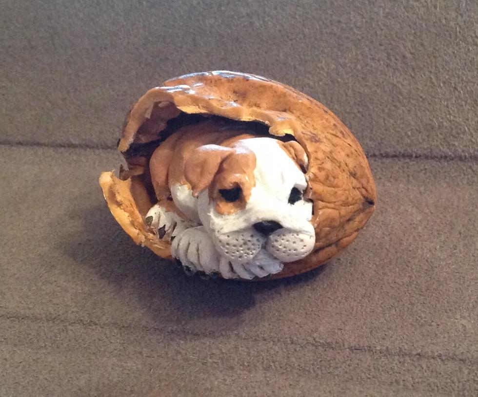 Bulldog pup in a nutshell by Shoshannah84