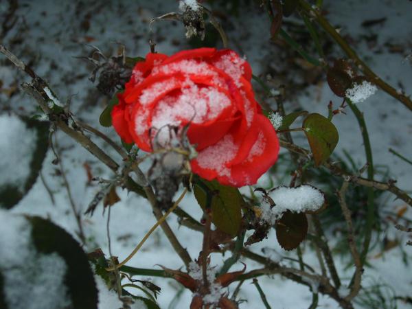 Frozen Desire 1 by harusohmalvr