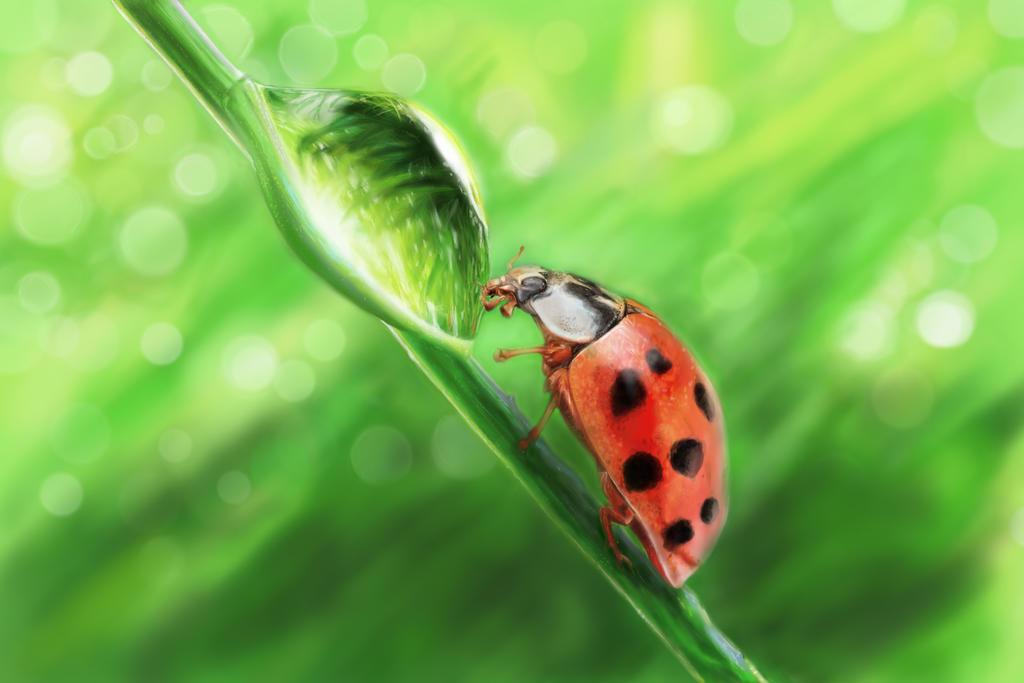 Ladybug meets Waterbug by persikon
