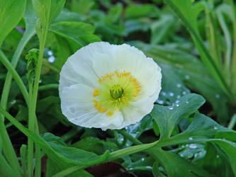 white flower by maresch