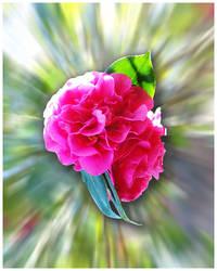 Psych Flower by maresch