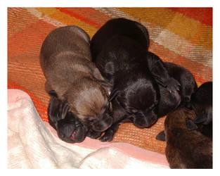 Let sleeping dogs lie 01 by maresch