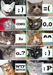 Cat with emoticon