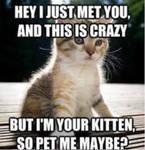 Hi kitteh