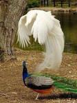 The amazing birds