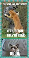 Warrior cats and grumpy cats meme