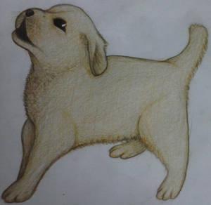 Labrador drawing by Shuddy