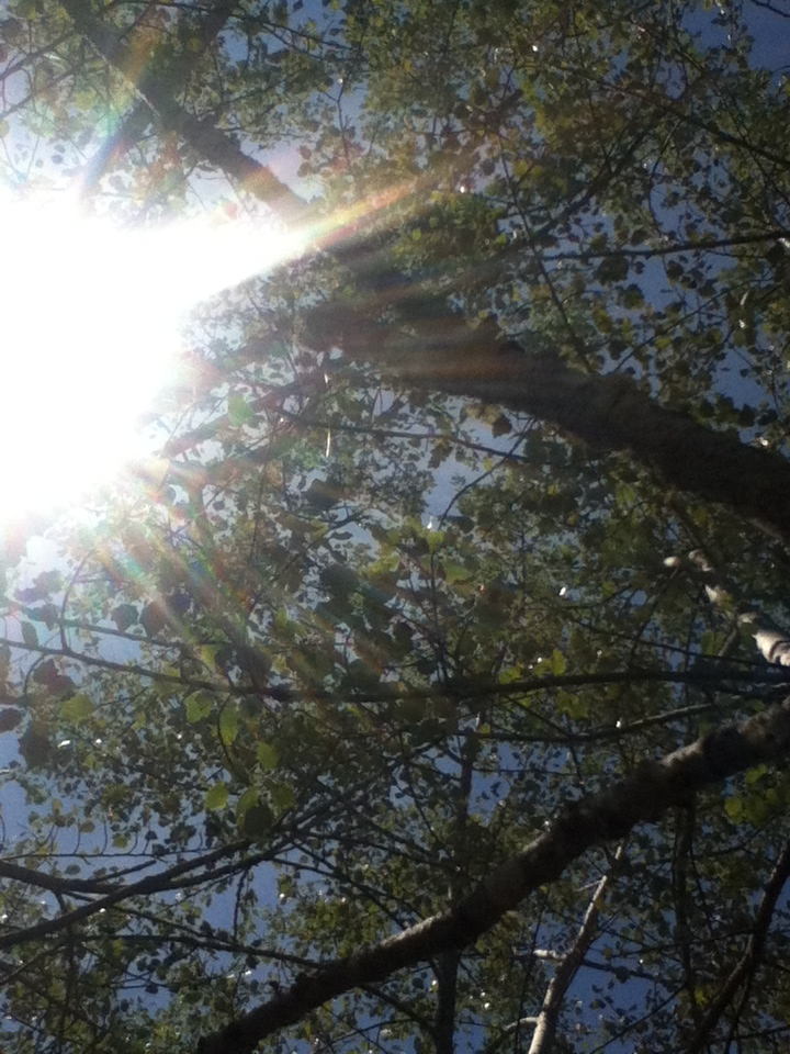 Sun through Trees by ImpavidMinds