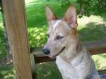 My pup by Blitzava