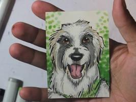 VIDEO-Commission-Pet Portrait ACEO-King Loui by Blitzava