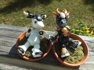 BJD-Cows