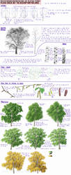 Birch Trees - research and practice sheet by Minks-Art