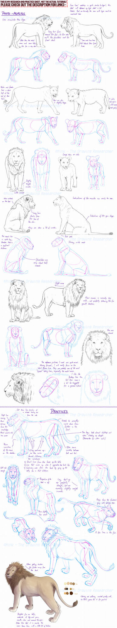 Lions - research and practice sheet