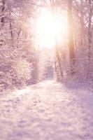 Winter Dreamworld by ChrisK-photo