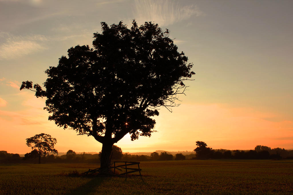 Tree Sunrise by thrill-killa