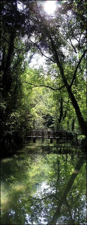 Nature reflection