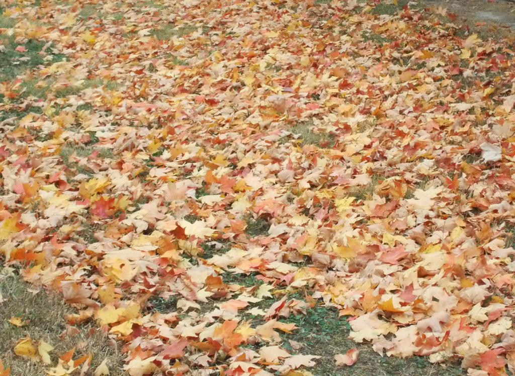 Autumn Leaves 2 by 11katie22