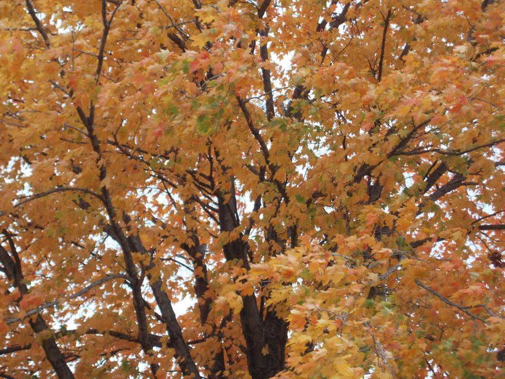 Autumn Tree 1 by 11katie22