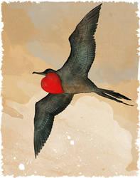 Magnificent Frigatebird by Mikadze