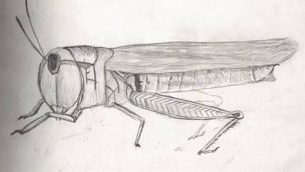 Grasshopper Study - 9-08