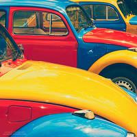Multicolored Beetles by oO-Rein-Oo
