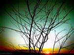 Amber Evening Sun