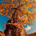 Give That Tree A Hug