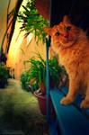 Hello, Garfield