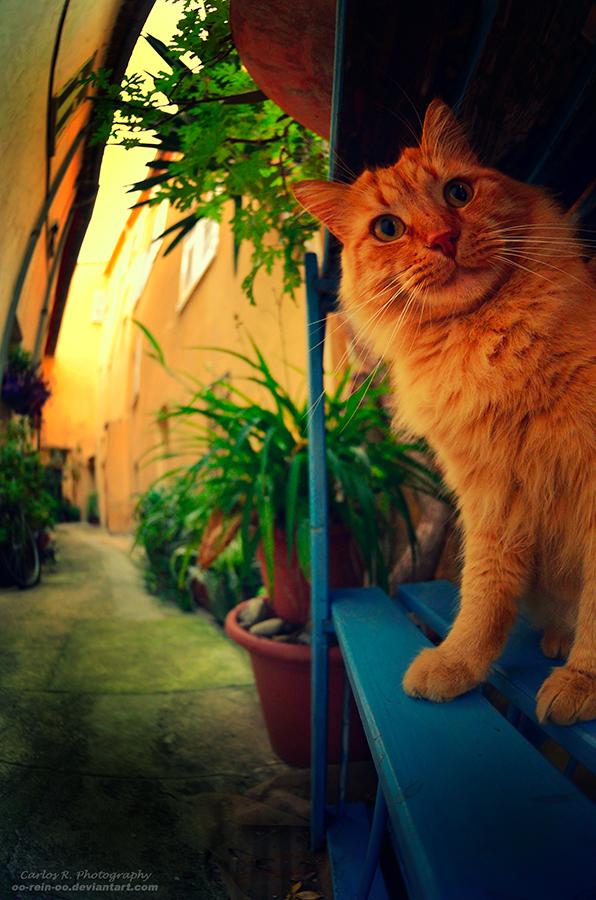 Hello, Garfield by oO-Rein-Oo