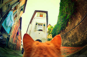 Alley Of The Cat by oO-Rein-Oo