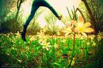 Landing In Wonderland