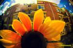 Sunny Amsterwonderland take i