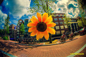 Sunny Amsterwonderland take iii by oO-Rein-Oo