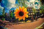 Sunny Amsterwonderland take iii
