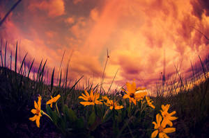 Garden Of Eden by oO-Rein-Oo