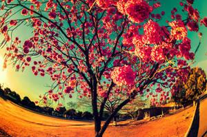 Pink Is Blooming by oO-Rein-Oo