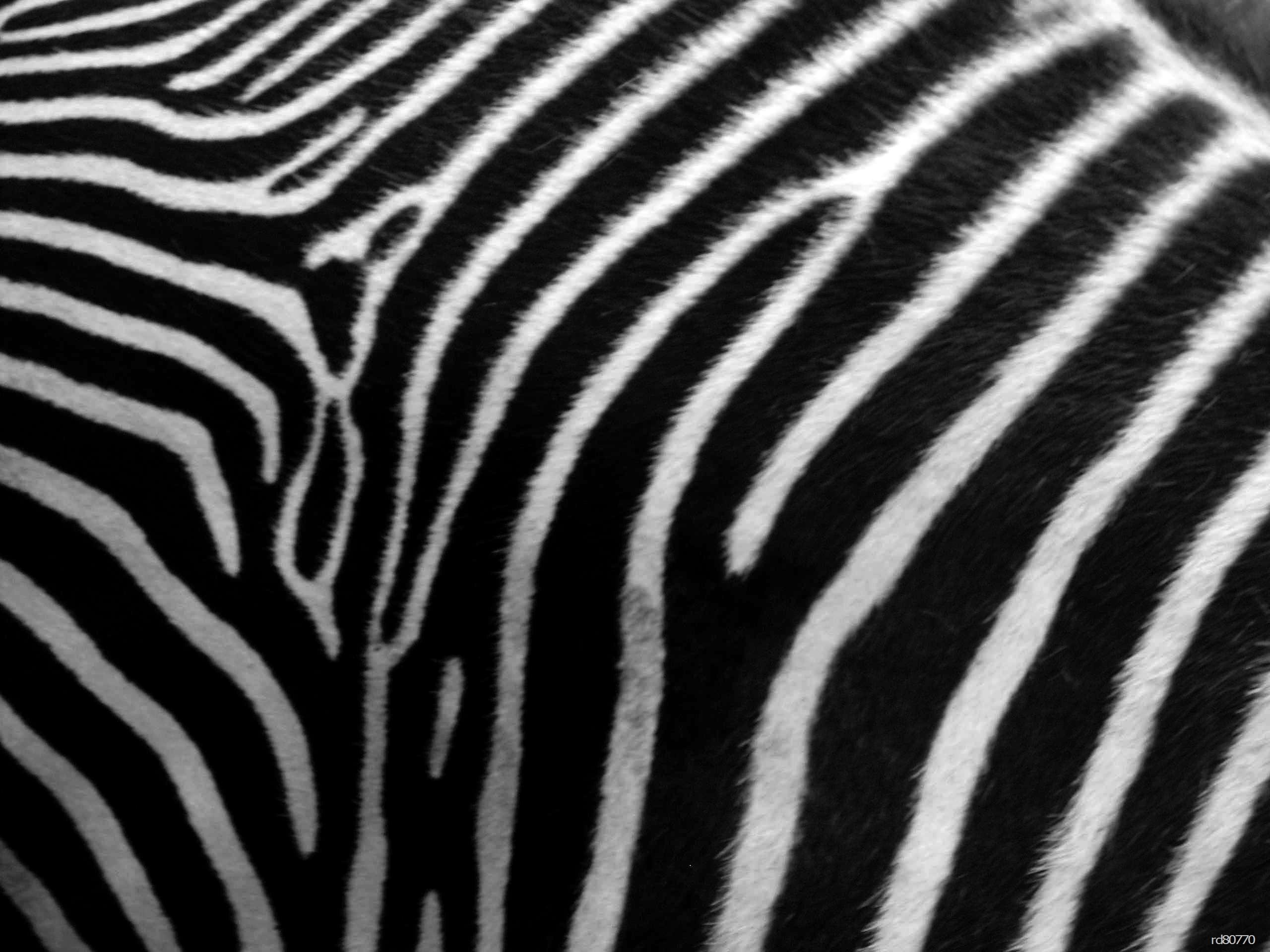 Zebra skin - photo#3