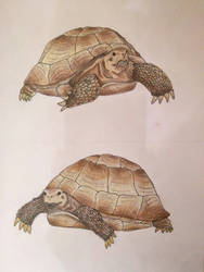 Turtles!!! by ReawenDarko