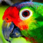 Parrot - Perroquet