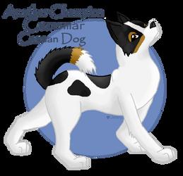 Canaan Dog by Ryachanira
