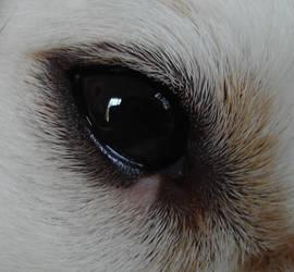 Dog eye by NoraDevius