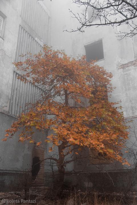 Sanatorio by algunavez