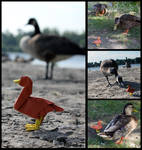 Adventure Duck