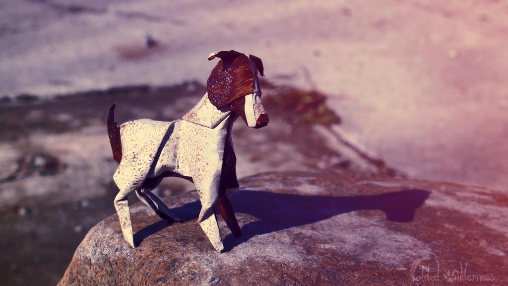 Jack Russel Terrier by FoldedWilderness