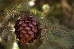 Origami Pine cone