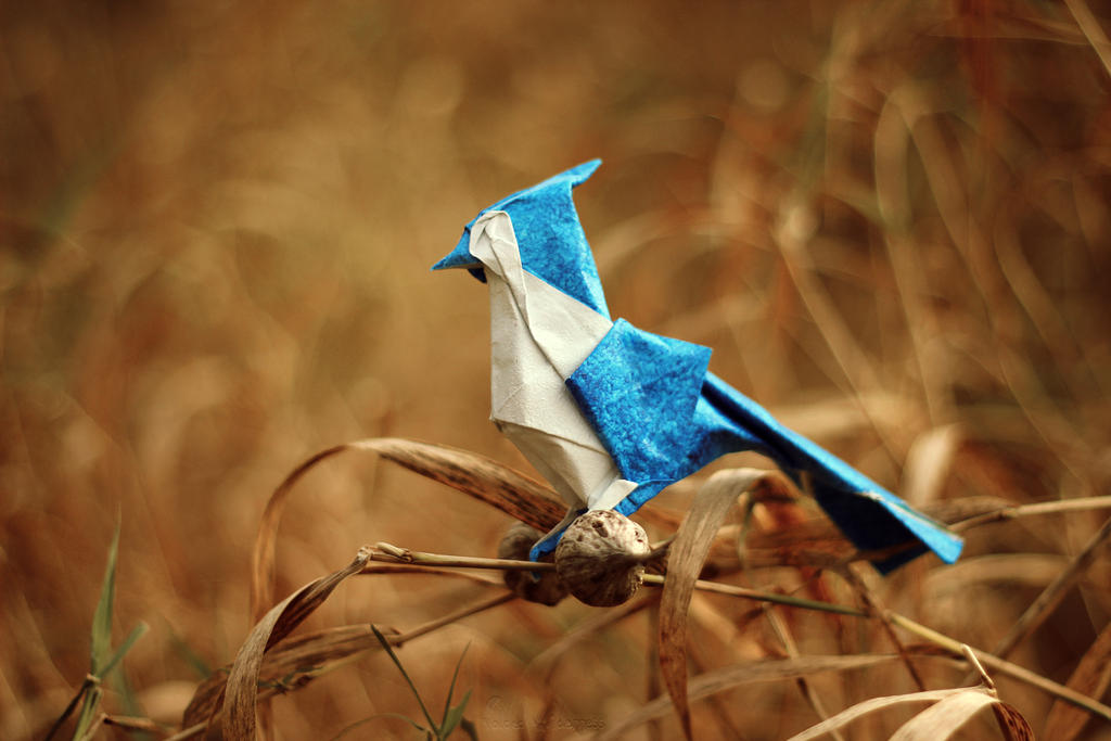 Autumn Blue Jay (Origami) by FoldedWilderness